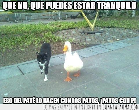 caminando,explicar,gato,juntos,paté,pato
