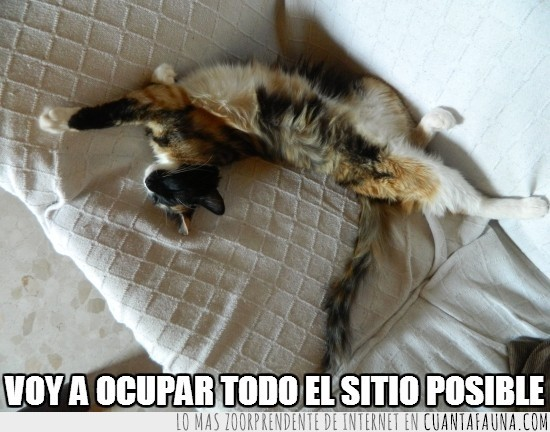 durmiendo,espacio,estirado,gato,ocupar,vago