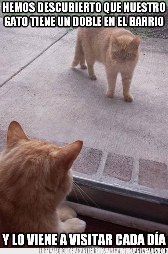 barrio,clon,doble,fascinación mutua,gato,visitar