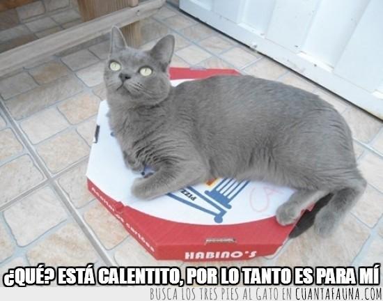 caja,caliente,hambre,me la quedo,pizza