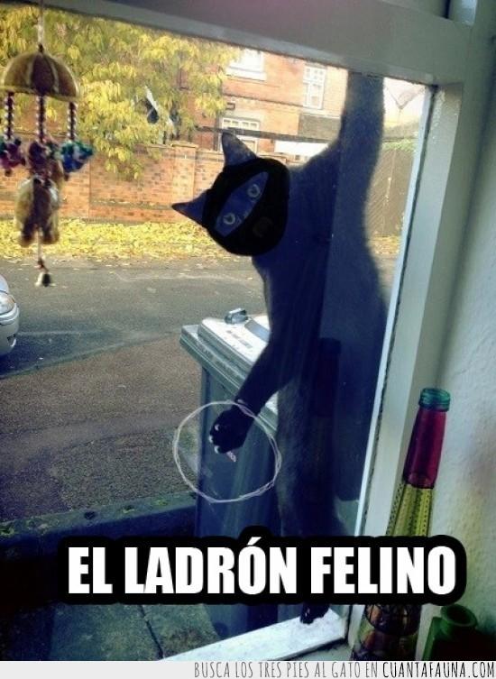 colgando,colgar,cristal,enmascarado,espejo,ladron felino,ninja,ventana