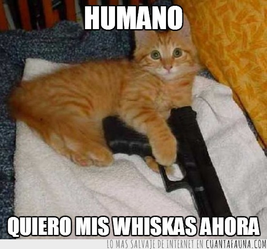 arma,gato,hambre,hambriento,humano,whiskas