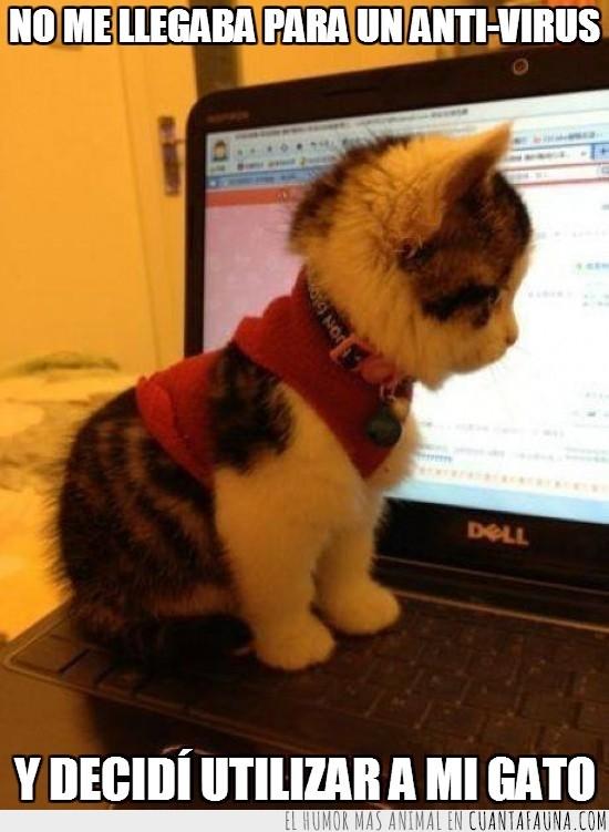 anti-virus,bonito,chaleco,cosita,gatito,Gato,peque,portatil,seguridad