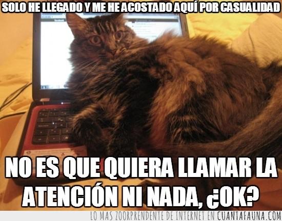 descansando,estoy aquí,facebook,gato,kitty,llamar la atención,notebook,teclado