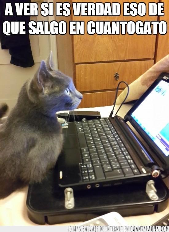 cuantogato,fiarse,mirar,netbook,portatil,web