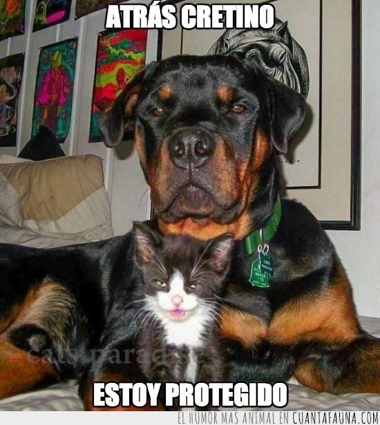 gato,guardia,maldad,malo,perro,protector