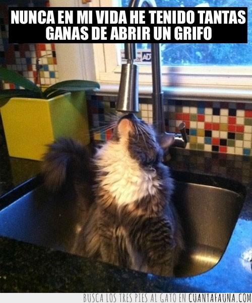 abrir,fregadero,gato,grifo,mirar,pica,tentación