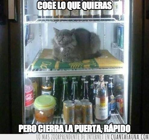 cervezas,frigorífico,nevera