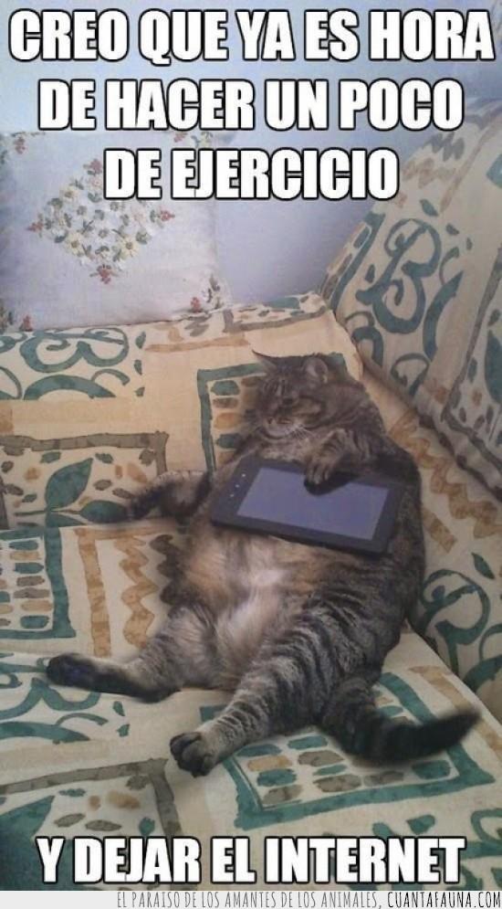 gordo,móvil,smartphone,sofá,tablet,vago