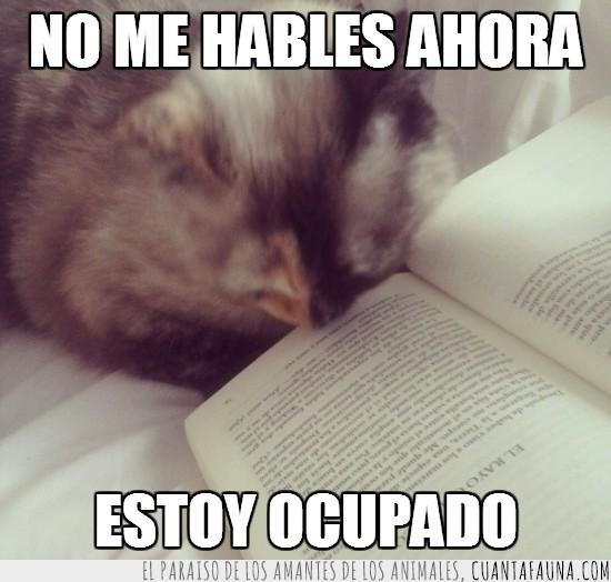 culto,gato,leer,leyendo,libro