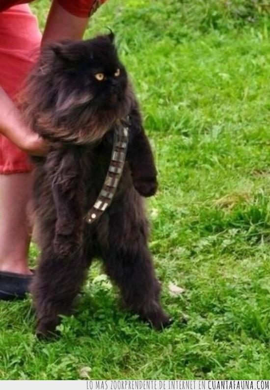 catwbacca,con el los siths eran derrotados en una pelicula,gato