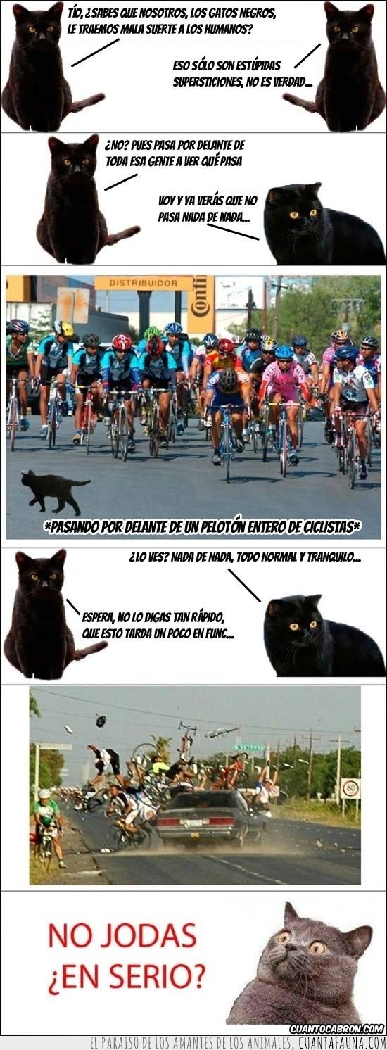 gatos,mala suerte,negros,poder