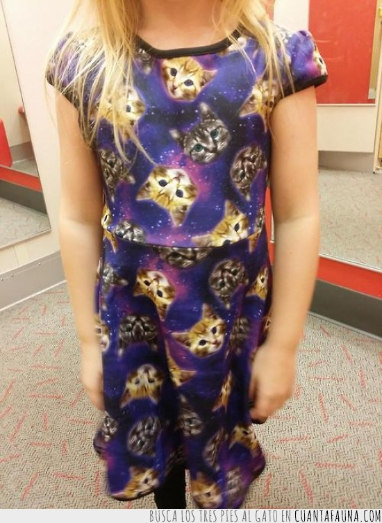 cabezas de gatos,gatos,medias,negro,niña,rubia,vestido