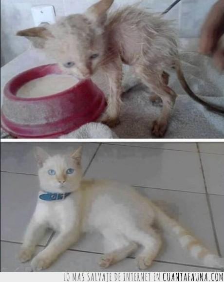 adoptar,bonito,gato,pequeño,sucio