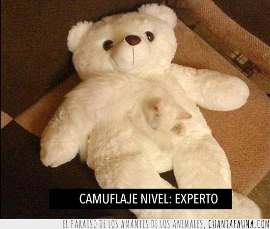 blanco,camouflage,camuflaje,cat,experto,gato,nivel,osito,oso