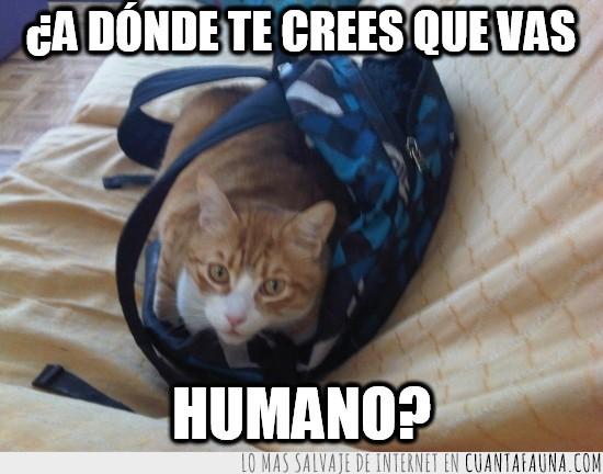 atento,gato,mochila,viaje