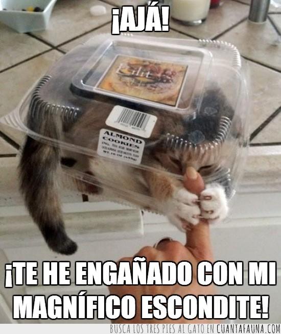 almond cookies,bandeja,envase,galletas,gato,mano,recipiente,transparente