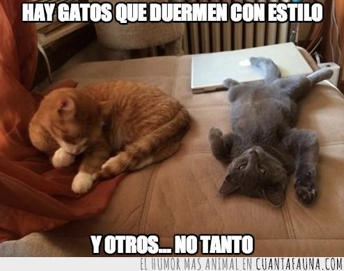 dormir,durmiendo,gatos,pose,raro,tumbado