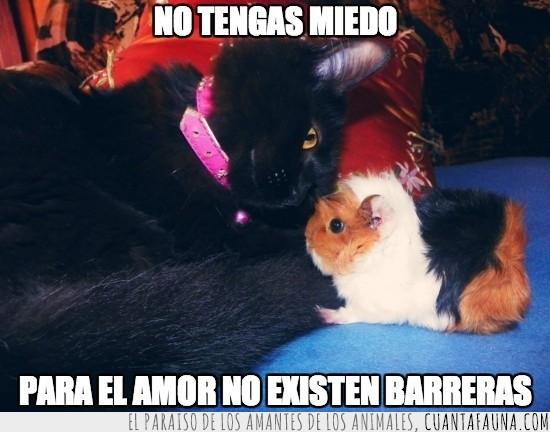 amor,barreras,cobaya