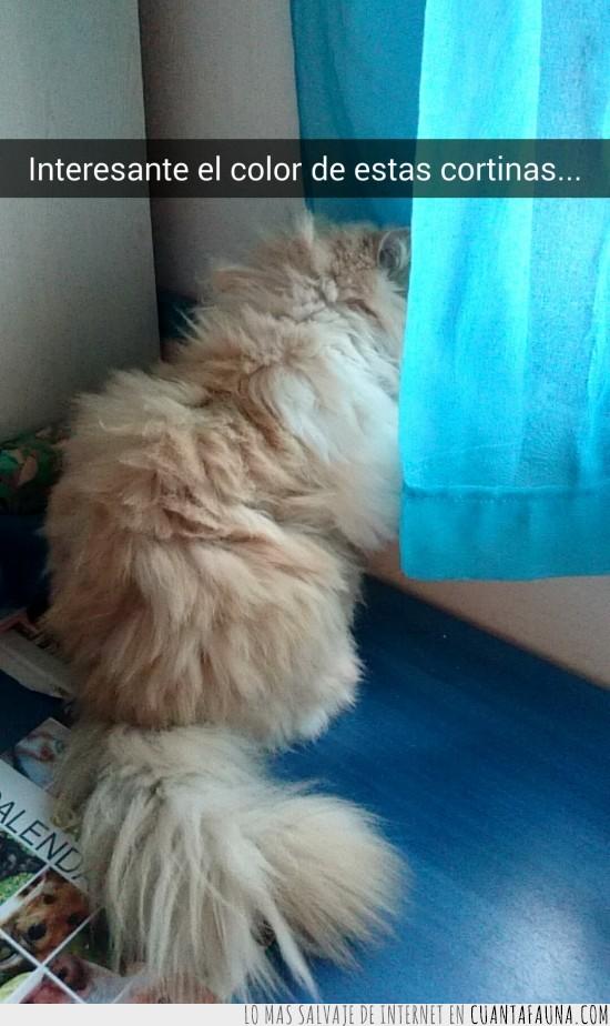 cortinas,gato,persa