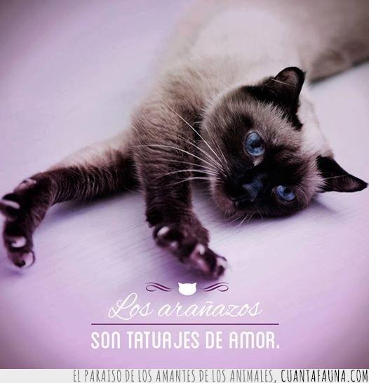 amor,arañazos,gato,marca,tatuajes