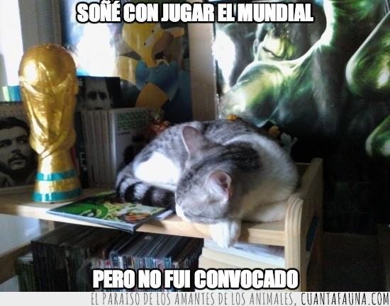 dormir,Mi gato Dexter,Mundial,sueño