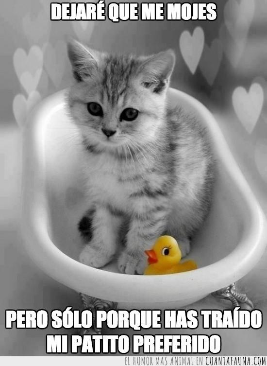 agua,amarillo,aseo,bañera,baño,Cortinas,diario,gatito,pato