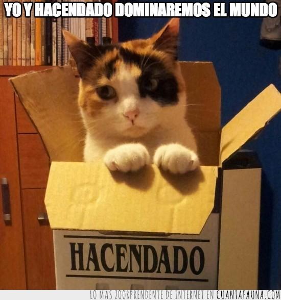 caja,gatito,hacendado,tricolor