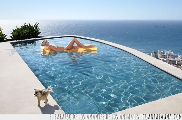 alberca,can,humor,mar,océano,orín,perro,piscina,playa