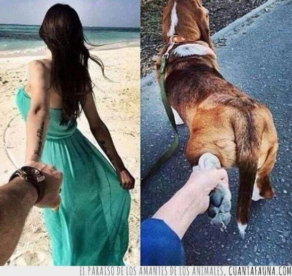 chica,expectativa,friendzone,novia,pata,perro,playa,realidad