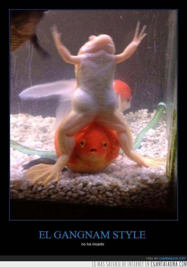 acuario,baile,Gangnam Style,humor,pecera,peces,rana