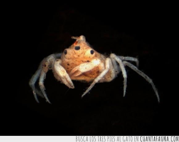 Cangrejo,extraño,igual al pez de los simpsons,Nueva Zelanda,tres ojos