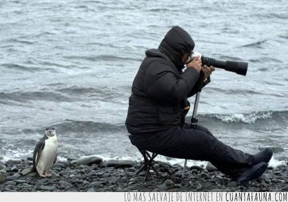 detras,equivocado,Fotografo,Frio,girado,girar,lado,Pingüino