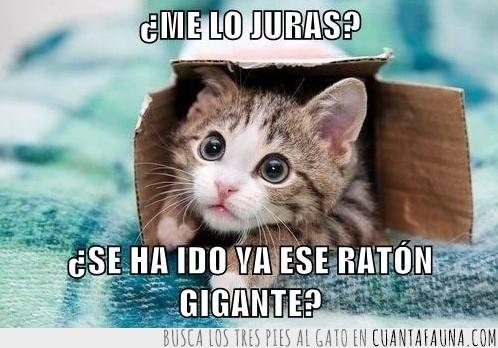 caja,escondido,miedo,rata,raton