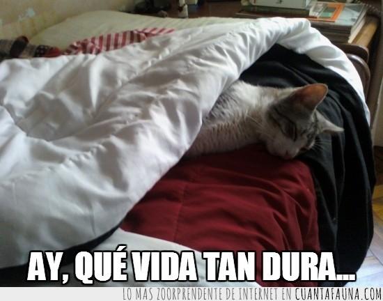 dormir,Mi gato Dexter,sueño,tapado,tumbado,vida