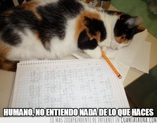 dormir,estudiando,estudiar,gato,lapiz,libreta