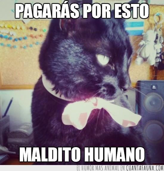 enfadado,gato negro,lacito,lazo,rosa,venganza