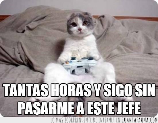 consola,friki,gamer,gato,mando,videojuegos,xbox