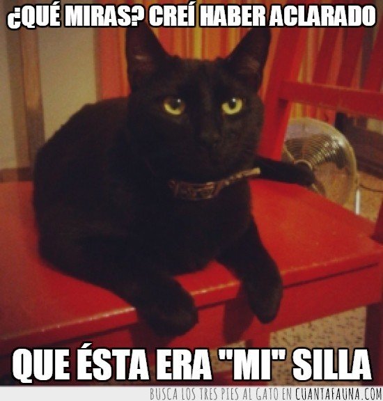 gato,gato negro,mío,pose,sentado,silla