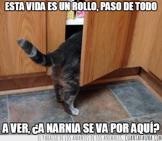 abrir,armario,cajón,narnia,puerta,rollo