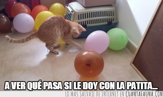 explotar,globos,jugar,la curiosidad exploto el globo,no va a acabar bien,patita,tora