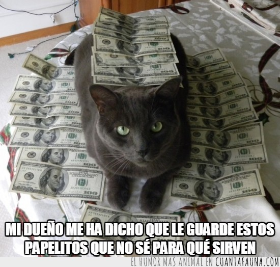 billetes,guardar,papeles,servir,vigilar