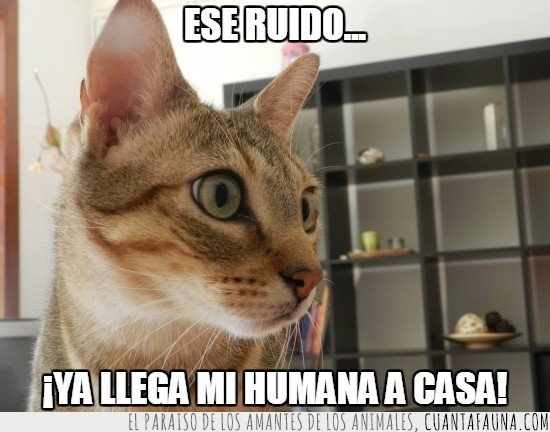 amor,gato,humana,mirada,no tardes,ojos,ruido,xipi