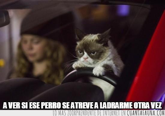 acelerar,atropellar,coche,conducir,conductor,gatito,Grumpy Cat,mal humor,muertos,rojo,todos
