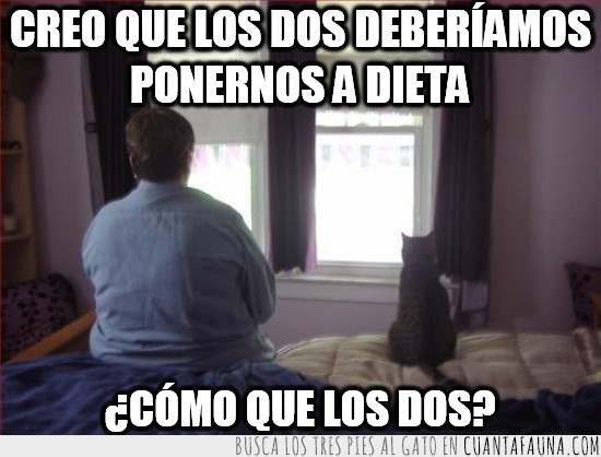 dieta,empezar,gato,gordo,horizonte,los dos,mirada perdida,ventana
