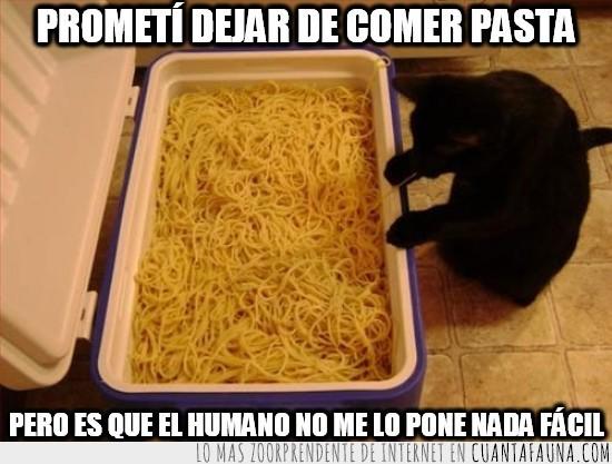 comer,espaguetis,llena,nevera,pasta,robar