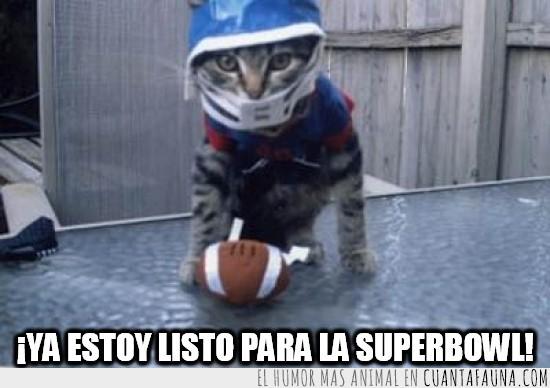 al menos el más mono,balon,casco,disfraz,futbol americano,jugador,superbowl