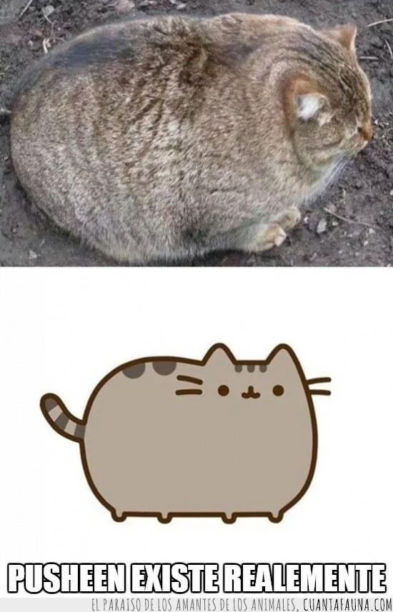 comic,gato,gordito,muy gordo,pusheen