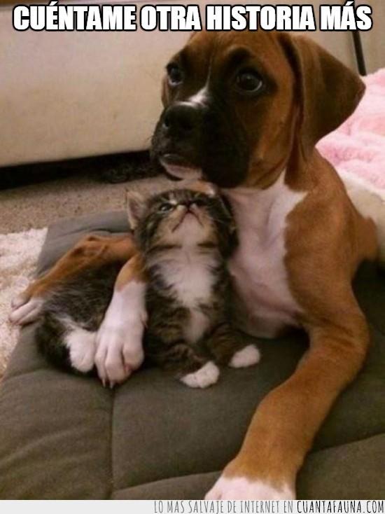 boxer,cachorro,contar,cria,cuentos,gato,historias,perro