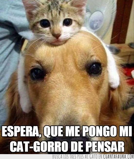 así piensa mejor,cat-gorro,gato,pensar,perro
